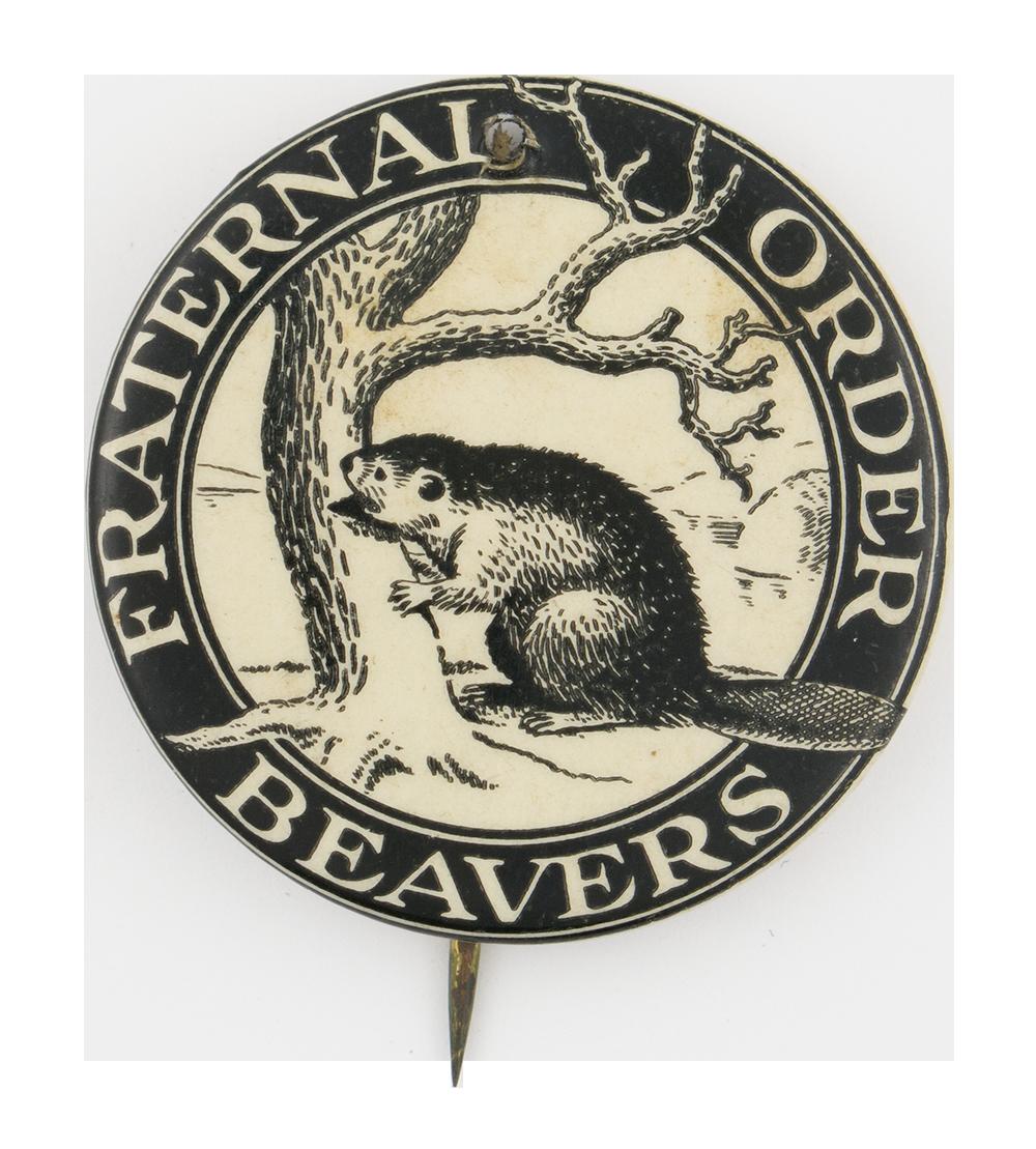 Fraternal Order Beavers Beavers Button Museum