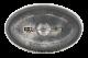 Sperm Whale 2 button back Art Button Museum