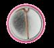 Clara Bow button back Entertainment Button Museum