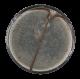 100 Percent button back Social Lubricators Button Museum