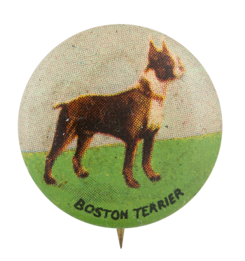 Boston Terrier Art Button Museum