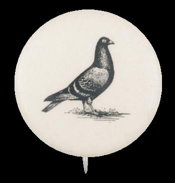 Pigeon Art Button Museum