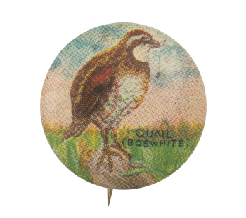 Quail Art Button Museum