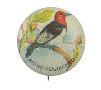 Red -Headed Woodpecker Art Button Museum