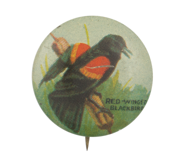 Red-Winged Blackbird Art Button Museum