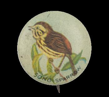 Song Sparrow Art Button Museum