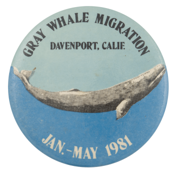Gray Whale Migration Event Button Museum