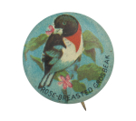 Rose-Breasted Grosbeak Art Button Museum