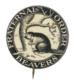 Fraternal Order Beavers Beavers Button Museum